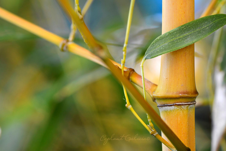 Coplant celebra el Día Internacional del Bambú con una semana dedicada a este producto