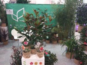 Coplant luce producto en el mayor escaparate internacional del sector de planta ornamental