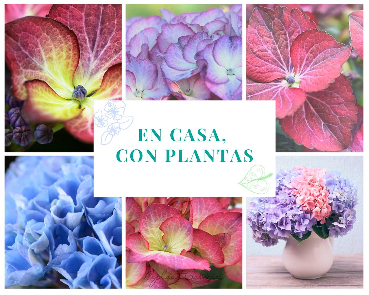 Estar en casa con plantas siempre es mejor - Coplant Galicia