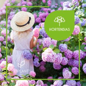 ¡Reinicia la primavera con nuestras hortensias!
