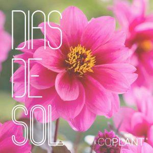 Dhalia, la flor que se alimenta del sol